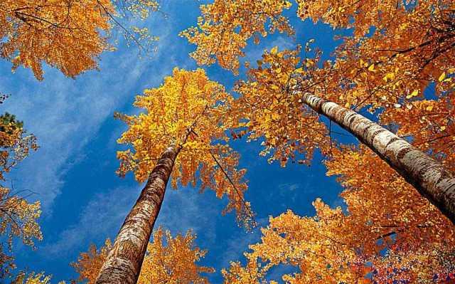 rustytrees-579bedc53df78c3276907e59